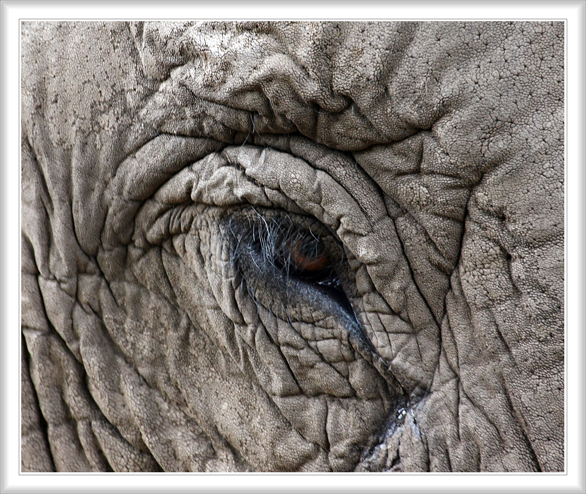 Olifant close-up